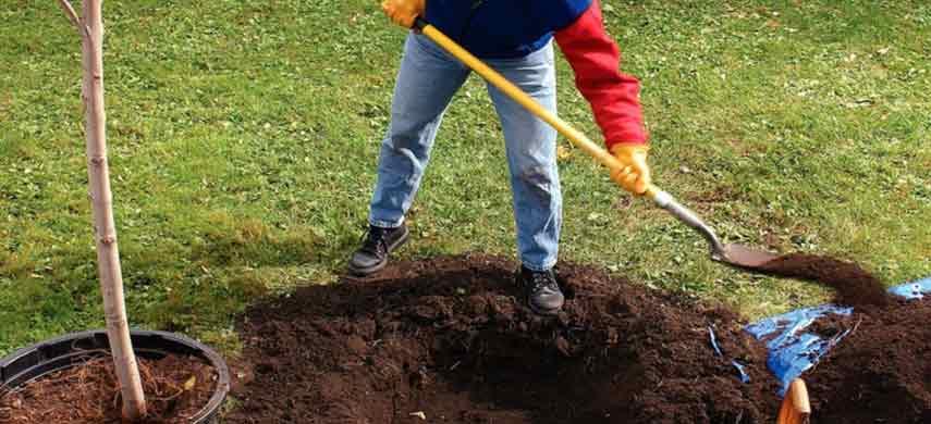 Правила посадки персика фото 7