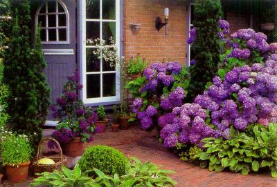 Какие растения выращивают в вашей местности для этой цели?