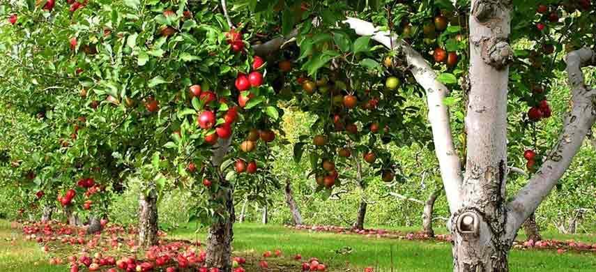 Совместимость деревьев фото 1