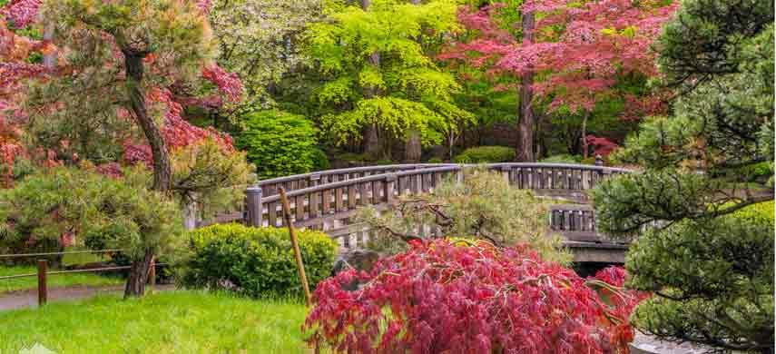 Совместимость деревьев фото 2