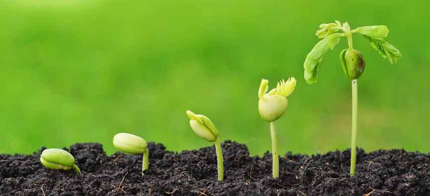 Чем обработать семена перед посевом photo 1