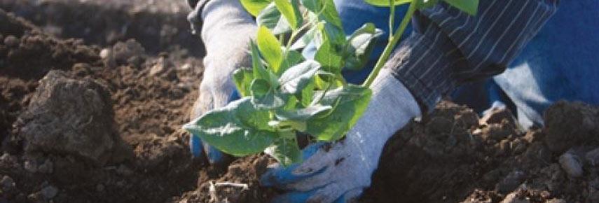 Семена в максидоме