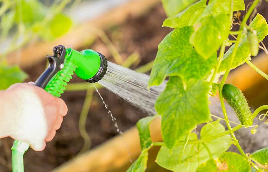 огурцы как получить большой урожай