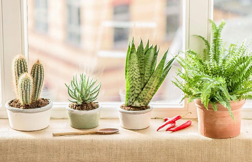 как ухаживать за комнатными цветами зимой