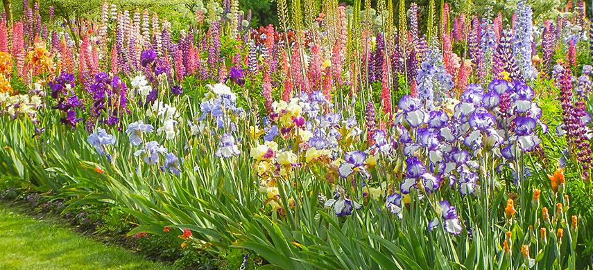 Луковичные в саду: создаем удачные композиции 3