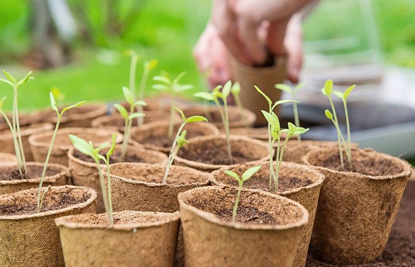 Чем обработать семена перед посевом