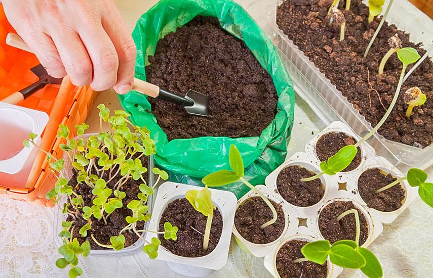 посадка семян на рассаду в кипяток