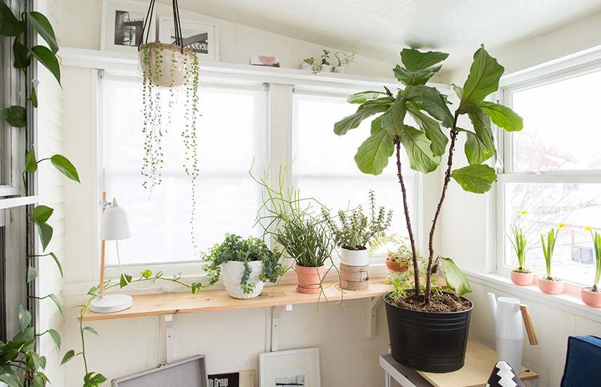 як доглядати за кімнатними рослинами